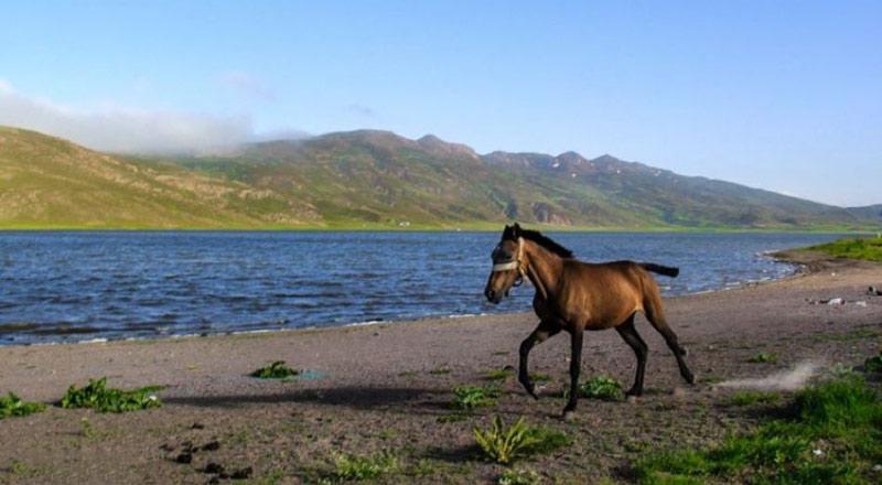 اسب سواری در نئور