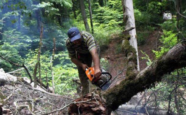 جنگل های شمال در معرض نابودی
