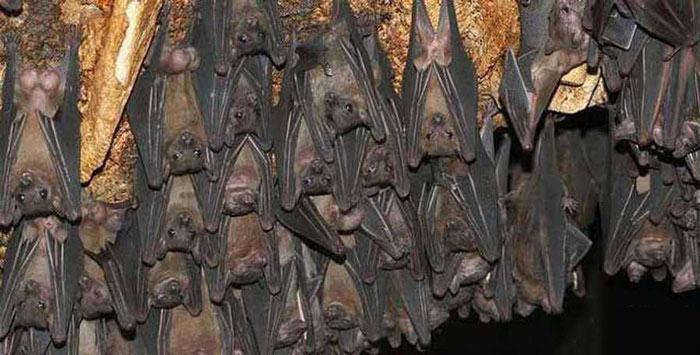 خفاش های دهلران