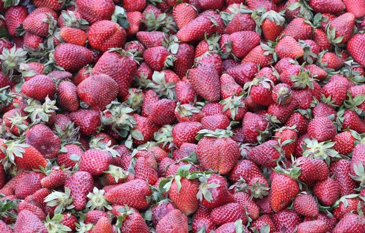 میوه فروشی خیابان کریمخان